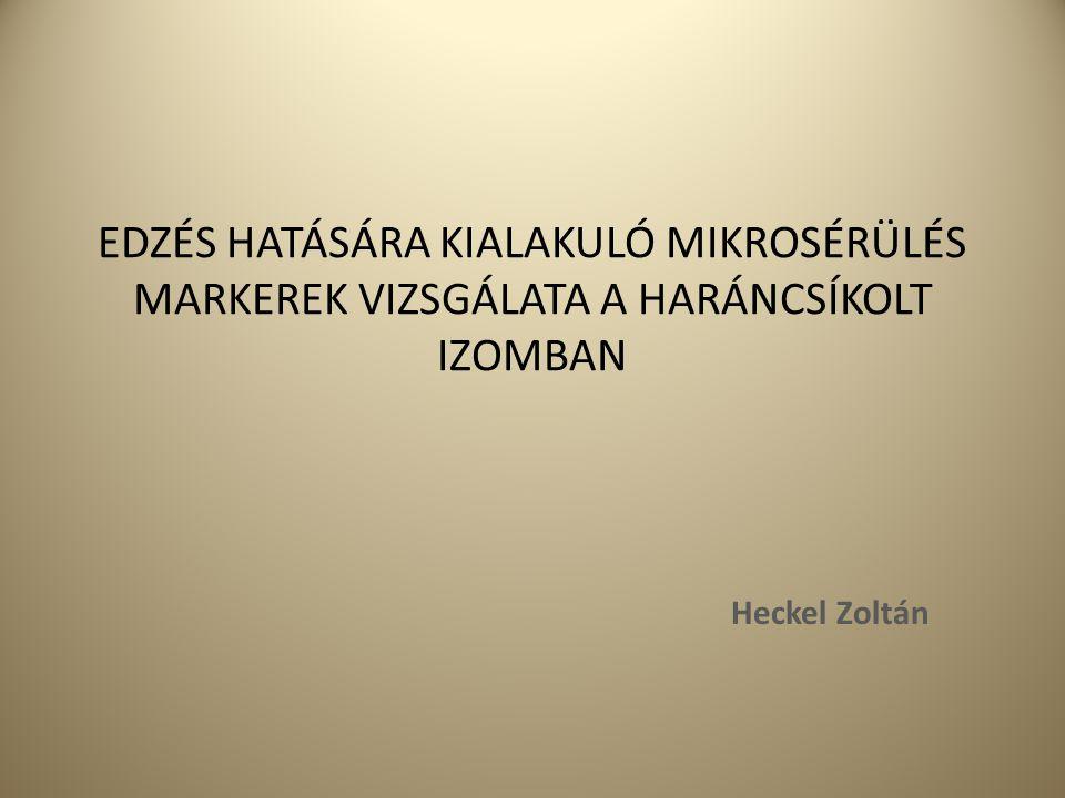 EDZÉS HATÁSÁRA KIALAKULÓ MIKROSÉRÜLÉS MARKEREK VIZSGÁLATA A HARÁNCSÍKOLT IZOMBAN Heckel Zoltán