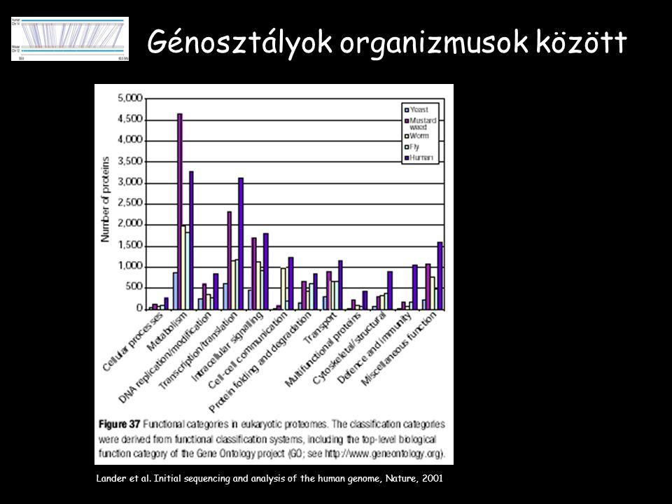 Génosztályok organizmusok között Lander et al.