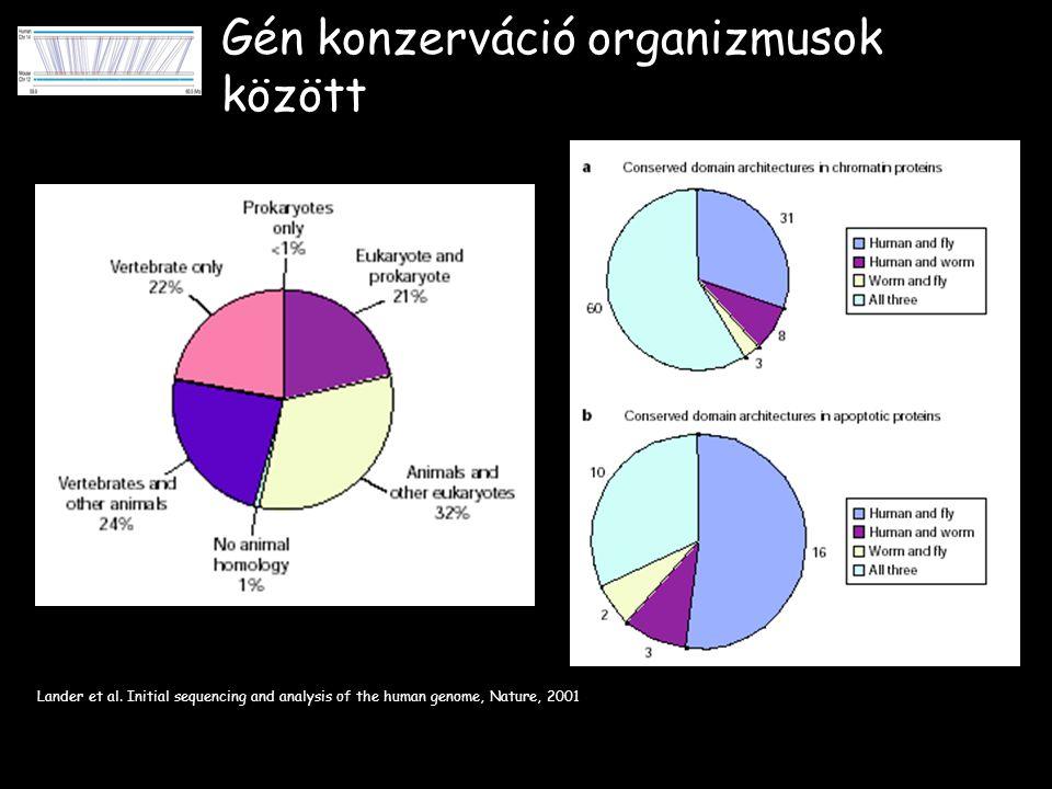 Gén konzerváció organizmusok között Lander et al.