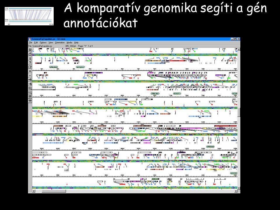 A komparatív genomika segíti a gén annotációkat