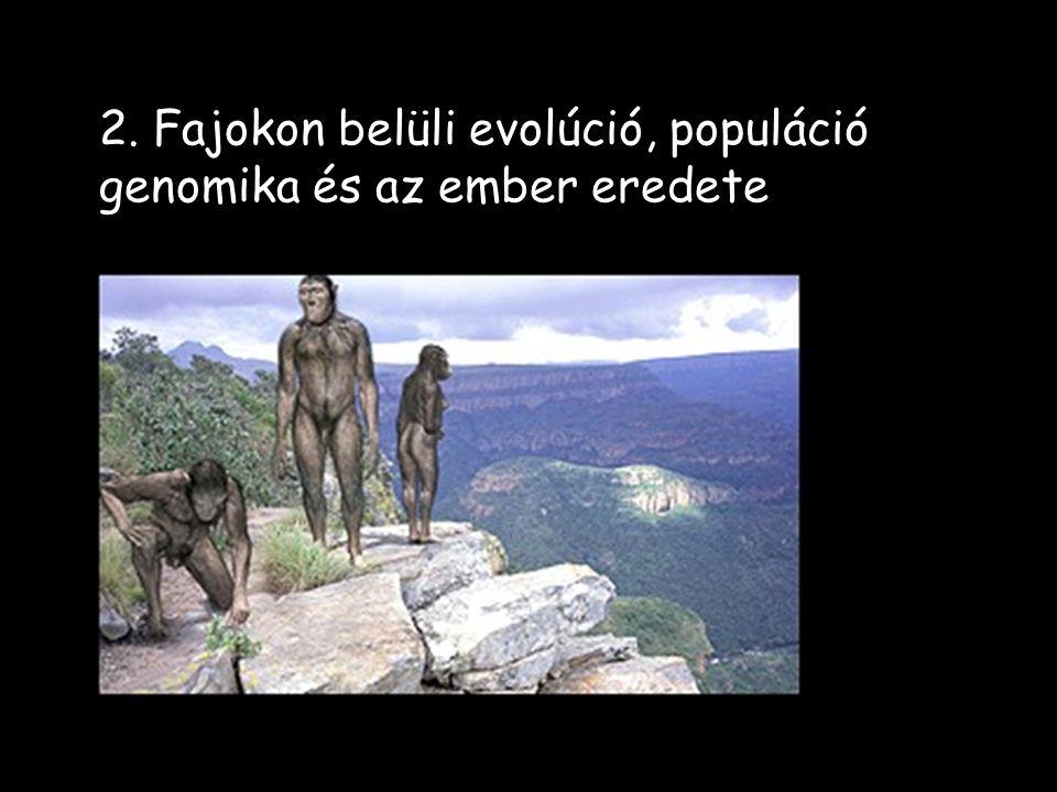 2. Fajokon belüli evolúció, populáció genomika és az ember eredete
