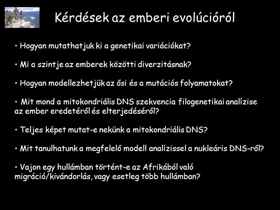 Kérdések az emberi evolúcióról Hogyan mutathatjuk ki a genetikai variációkat.