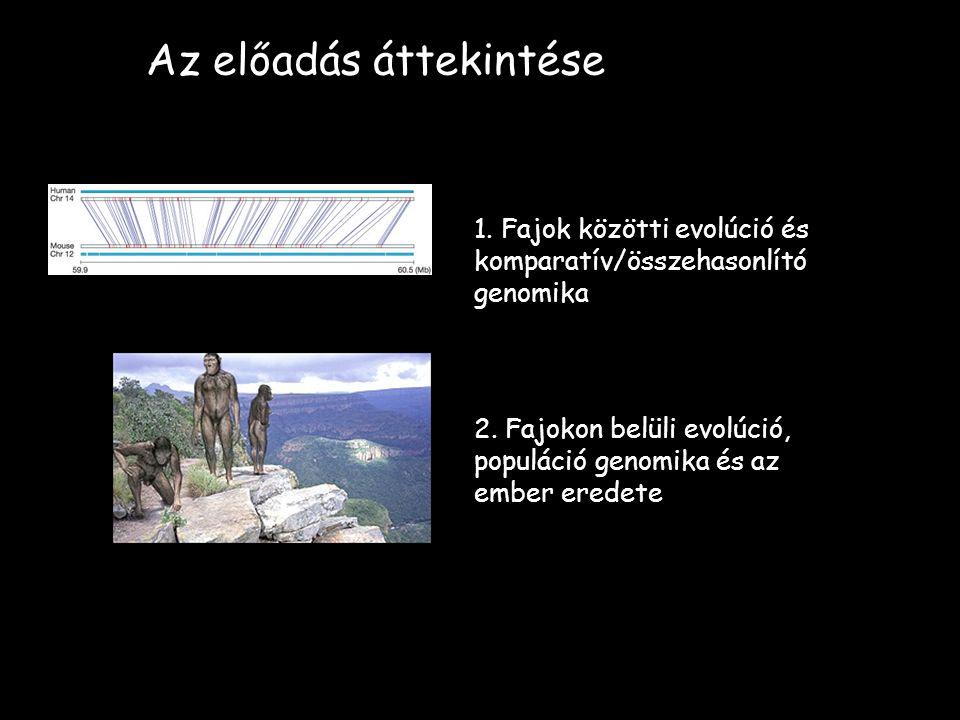 Az előadás áttekintése 1. Fajok közötti evolúció és komparatív/összehasonlító genomika 2.
