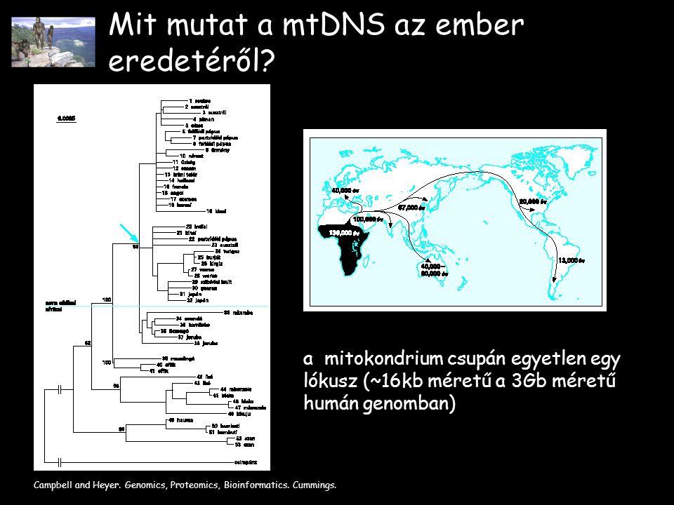 Mit mutat a mtDNS az ember eredetéről.