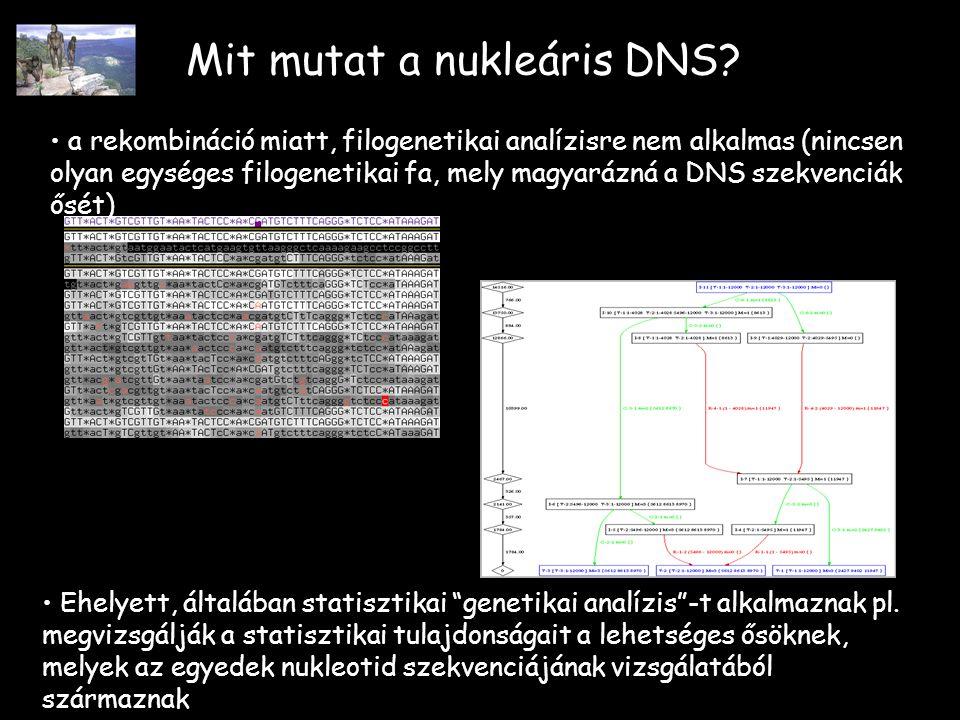 Mit mutat a nukleáris DNS.