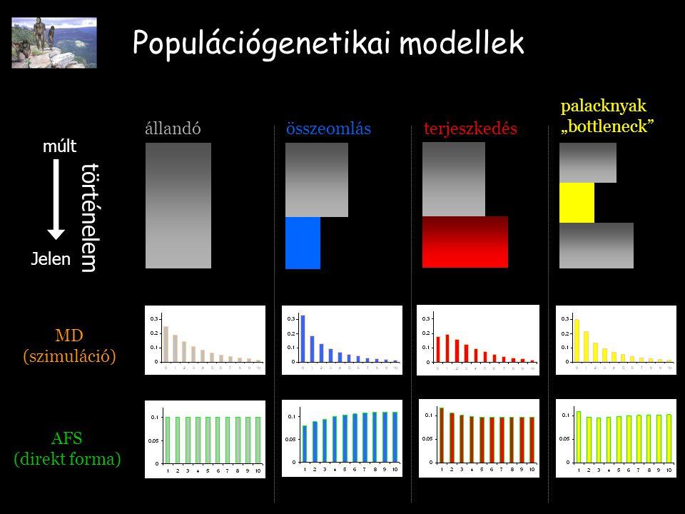 """Populációgenetikai modellek múlt Jelen állandóterjeszkedésösszeomlás MD (szimuláció) AFS (direkt forma) történelem palacknyak """"bottleneck"""