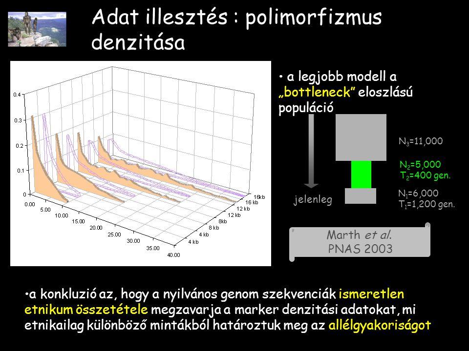 """Adat illesztés : polimorfizmus denzitása a legjobb modell a """"bottleneck eloszlású populáció jelenleg N 1 =6,000 T 1 =1,200 gen."""