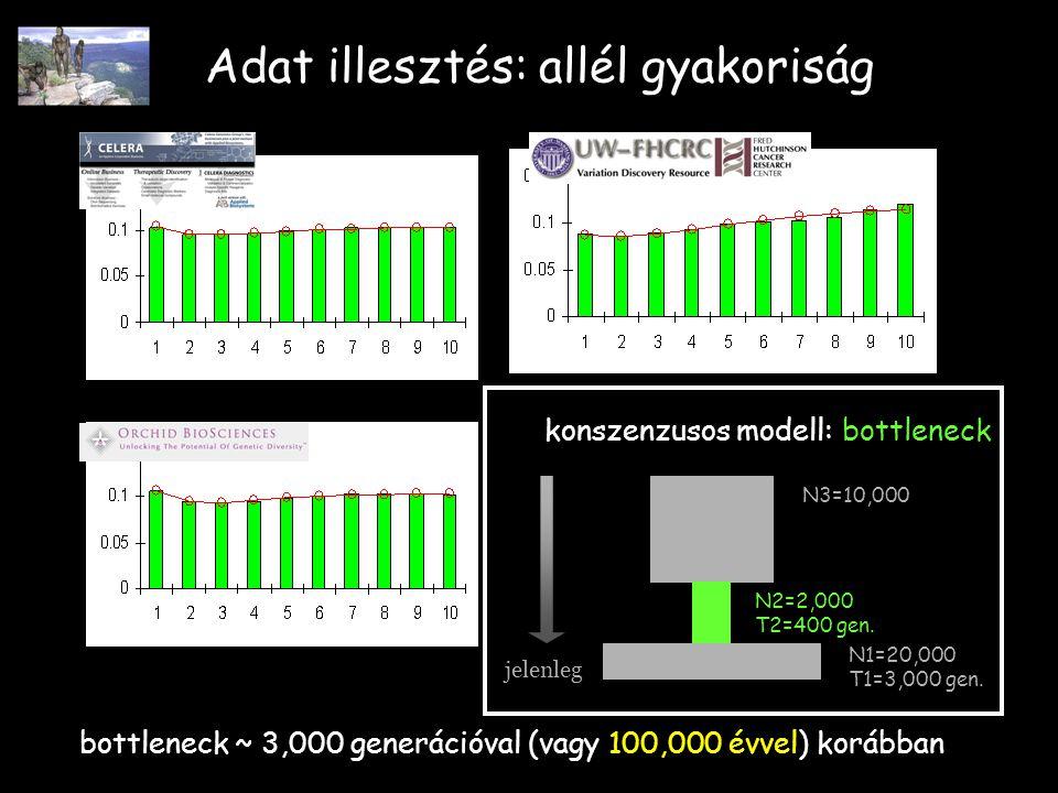 Adat illesztés: allél gyakoriság jelenleg N1=20,000 T1=3,000 gen.