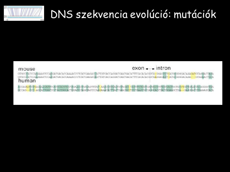 DNS szekvencia evolúció: mutációk