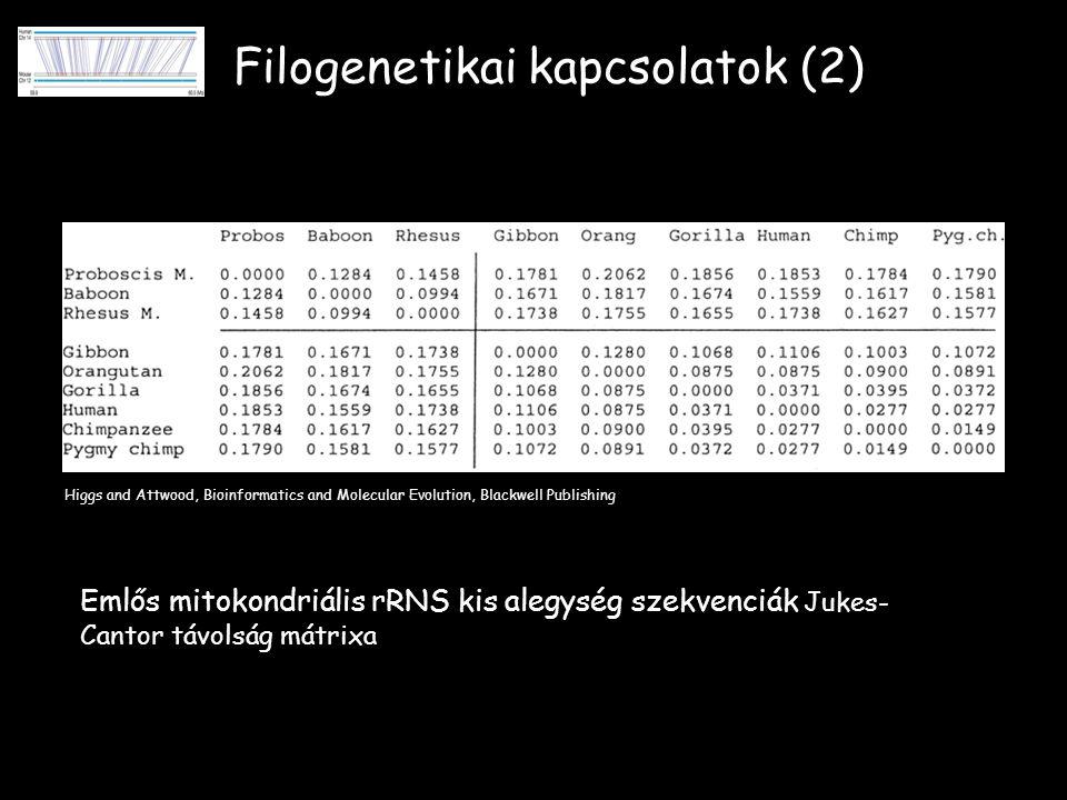 Filogenetikai kapcsolatok (2) Higgs and Attwood, Bioinformatics and Molecular Evolution, Blackwell Publishing Emlős mitokondriális rRNS kis alegység szekvenciák Jukes- Cantor távolság mátrixa
