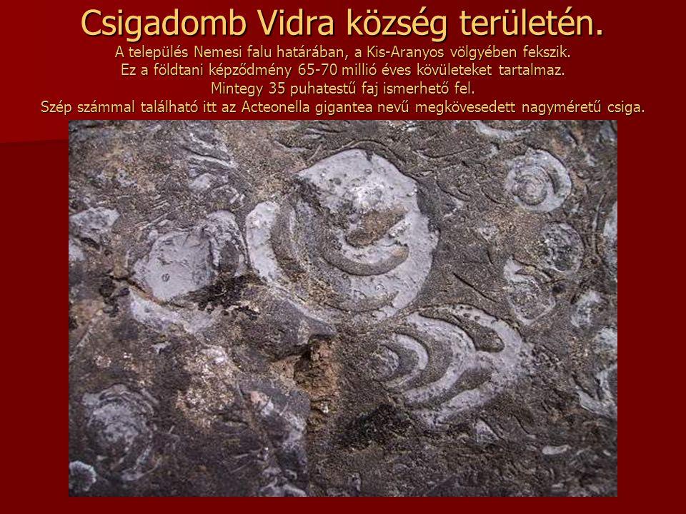 Vidám temető Szaploncán Szaplonca a Tisza bal partján fekszik Máramarossziget közelében. A sírokon színes naiv festmények ábrázolják az elhunytak fogl