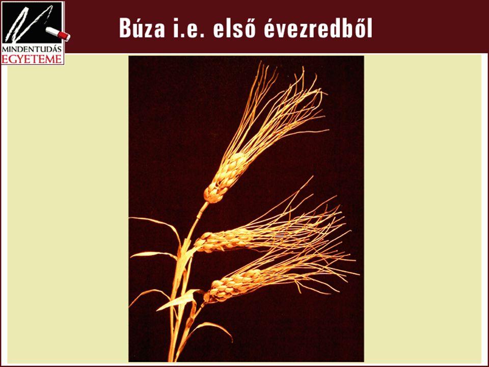 Zea mays (2013/14: a Vt. 967 millió t.)