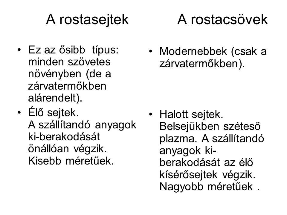 A rostasejtek Ez az ősibb típus: minden szövetes növényben (de a zárvatermőkben alárendelt).
