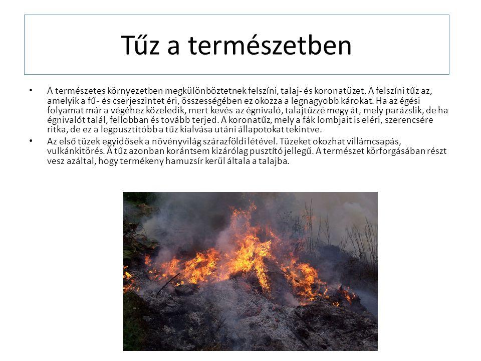 Tűz a természetben A természetes környezetben megkülönböztetnek felszíni, talaj- és koronatüzet.