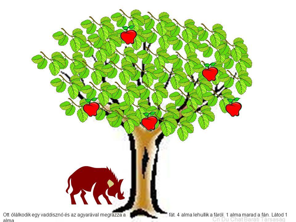 Ott ólálkodik egy vaddisznó és az agyarával megrázza a fát. 4 alma lehullik a fáról. 1 alma marad a fán. Látod 1 alma. Cri Du Chat Baráti Társaság