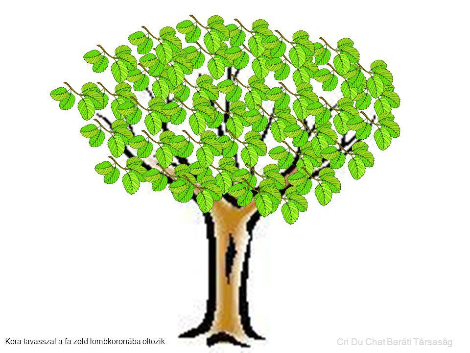 Kora tavasszal a fa zöld lombkoronába öltözik. Cri Du Chat Baráti Társaság
