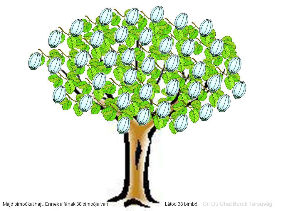 Majd bimbókat hajt. Ennek a fának 38 bimbója van. Látod 38 bimbó. Cri Du Chat Baráti Társaság
