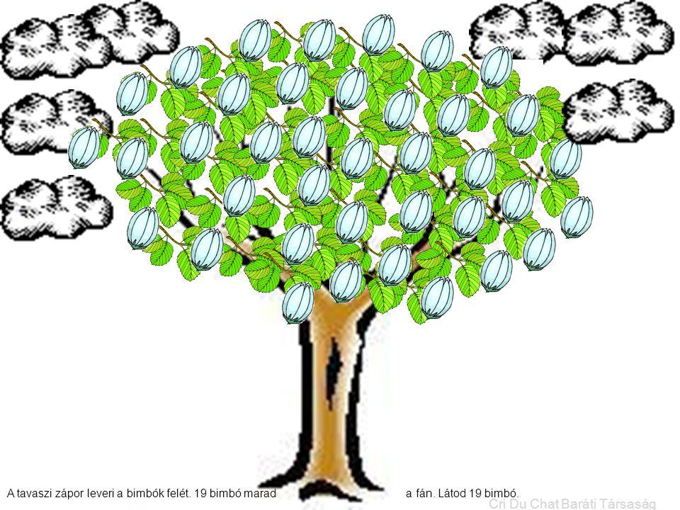 A tavaszi zápor leveri a bimbók felét. 19 bimbó marad a fán. Látod 19 bimbó. Cri Du Chat Baráti Társaság