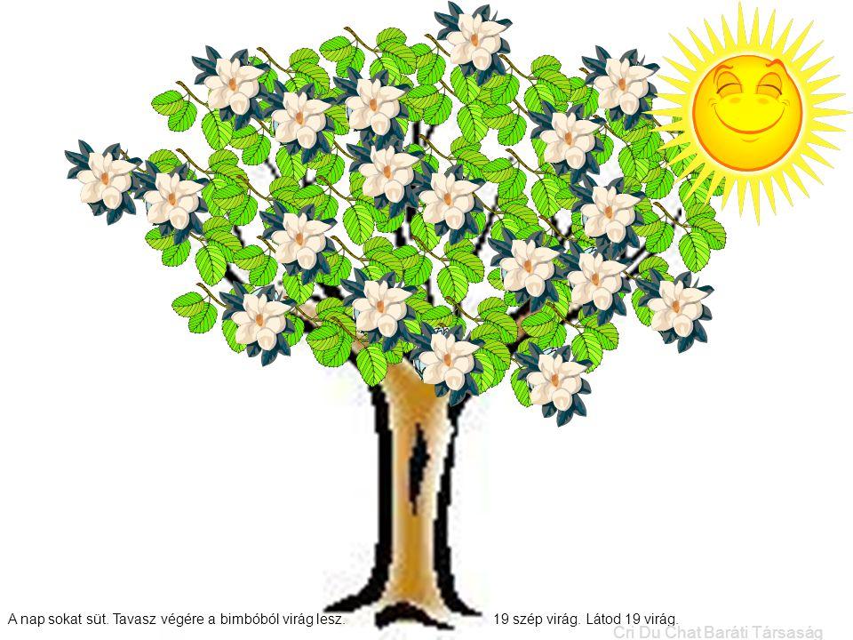 A nap sokat süt. Tavasz végére a bimbóból virág lesz. 19 szép virág. Látod 19 virág. Cri Du Chat Baráti Társaság