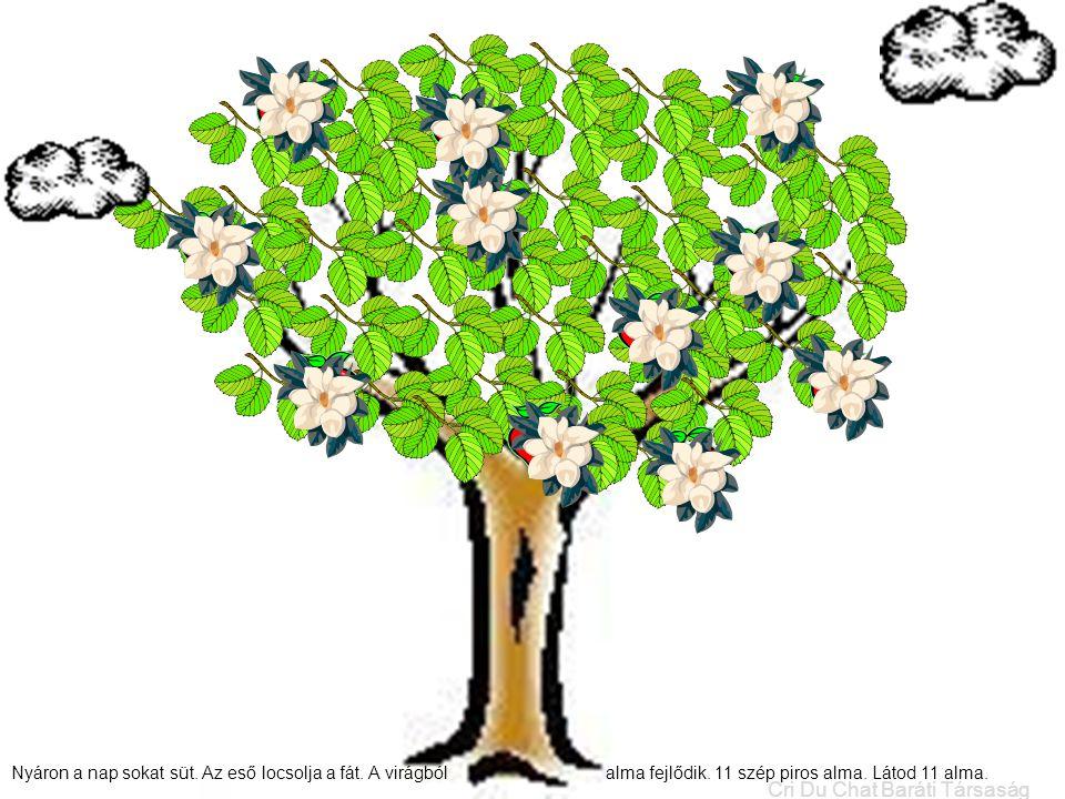 Nyáron a nap sokat süt. Az eső locsolja a fát. A virágból alma fejlődik. 11 szép piros alma. Látod 11 alma. Cri Du Chat Baráti Társaság