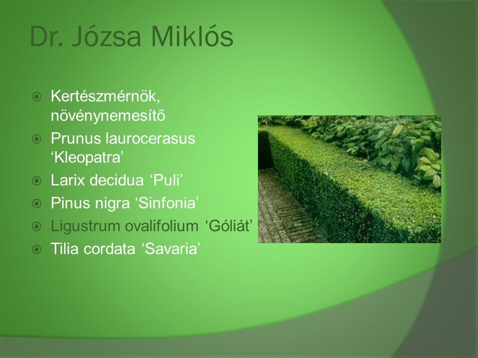 Dr. Józsa Miklós  Kertészmérnök, növénynemesítő  Prunus laurocerasus 'Kleopatra'  Larix decidua 'Puli'  Pinus nigra 'Sinfonia'  Ligustrum ovalifo