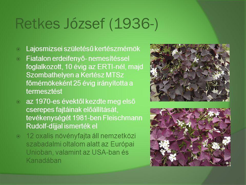 Retkes József (1936-)  Lajosmizsei születésű kertészmérnök  Fiatalon erdeifenyő- nemesítéssel foglalkozott, 10 évig az ERTI-nél, majd Szombathelyen