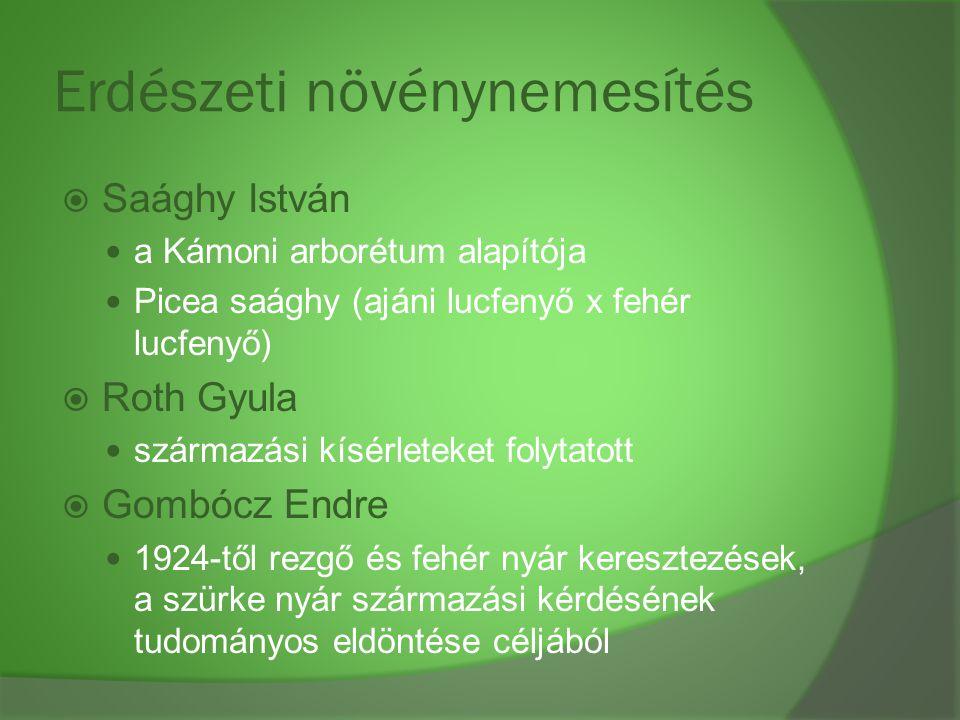 Erdészeti növénynemesítés  Saághy István a Kámoni arborétum alapítója Picea saághy (ajáni lucfenyő x fehér lucfenyő)  Roth Gyula származási kísérlet