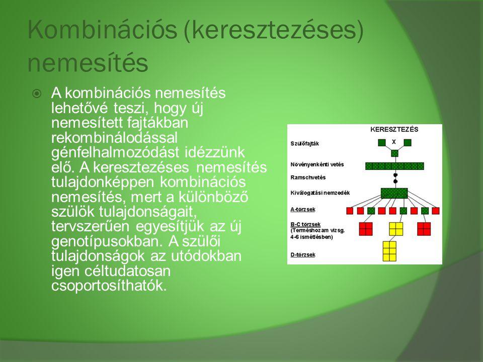 Kombinációs (keresztezéses) nemesítés  A kombinációs nemesítés lehetővé teszi, hogy új nemesített fajtákban rekombinálodással génfelhalmozódást idézz