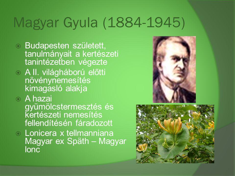 Magyar Gyula (1884-1945)  Budapesten született, tanulmányait a kertészeti tanintézetben végezte  A II. világháború előtti növénynemesítés kimagasló