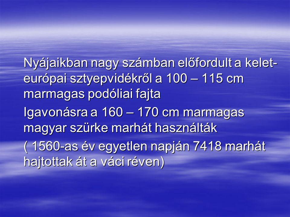 Nyájaikban nagy számban előfordult a kelet- európai sztyepvidékről a 100 – 115 cm marmagas podóliai fajta Igavonásra a 160 – 170 cm marmagas magyar sz