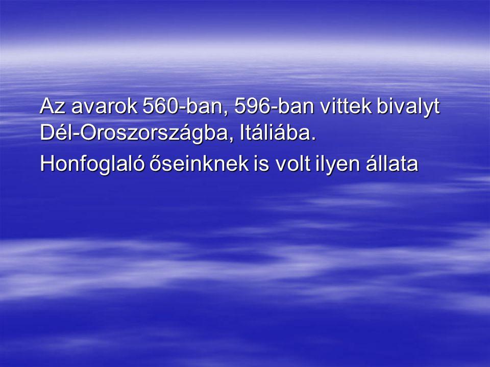Az avarok 560-ban, 596-ban vittek bivalyt Dél-Oroszországba, Itáliába. Honfoglaló őseinknek is volt ilyen állata
