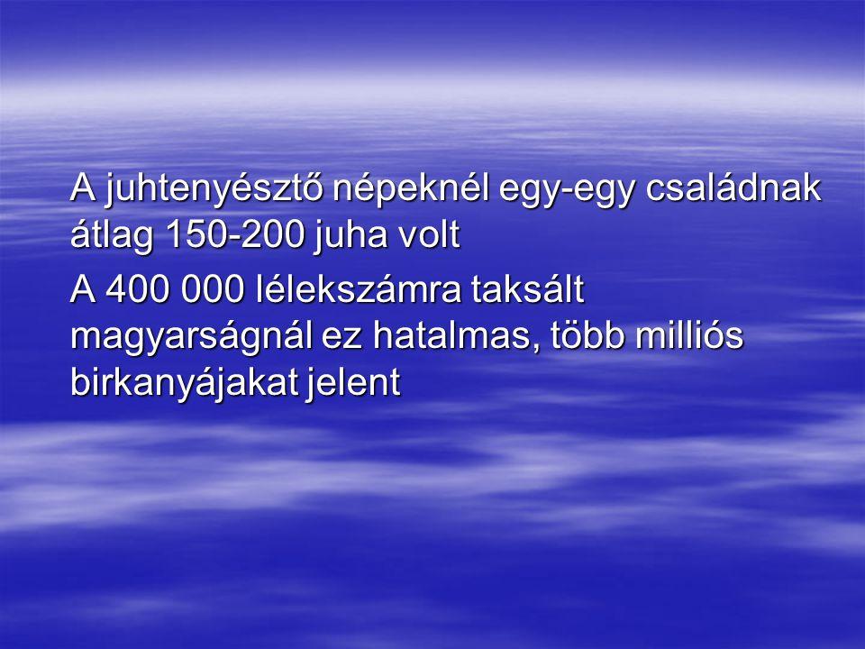 A juhtenyésztő népeknél egy-egy családnak átlag 150-200 juha volt A 400 000 lélekszámra taksált magyarságnál ez hatalmas, több milliós birkanyájakat j