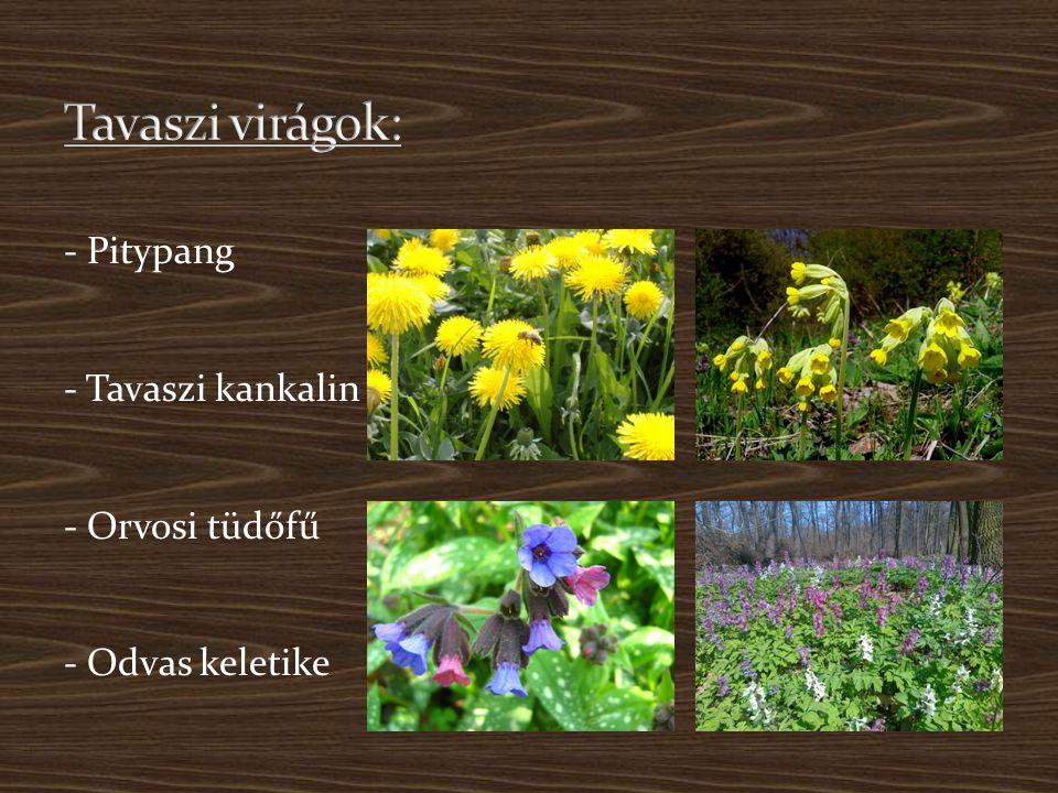 - Pitypang - Tavaszi kankalin - Orvosi tüdőfű - Odvas keletike