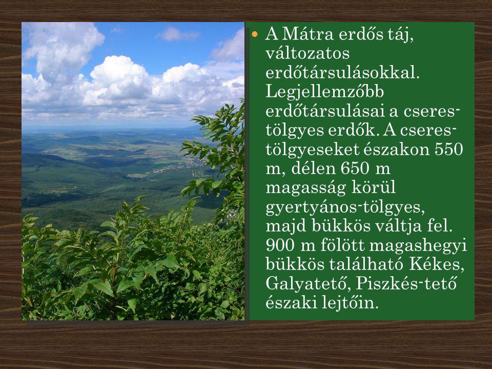 A Mátra erdős táj, változatos erdőtársulásokkal. Legjellemzőbb erdőtársulásai a cseres- tölgyes erdők. A cseres- tölgyeseket északon 550 m, délen 650
