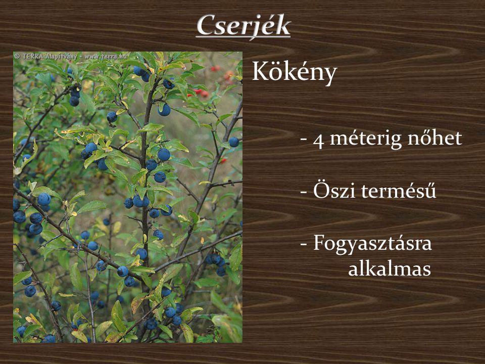 Bodza - Magassága a 10 métert is elérheti - Gyógynövényként használjál - Könnyen felismerhető nagy fehéres virágáról - Bogyótermés Csipke - Akár 5 méteresre is megnőhet - Teát és lekvárt készítenek belőle - Felismerhető piros terméséről és szúrós tüskéiről - Bogyótermés