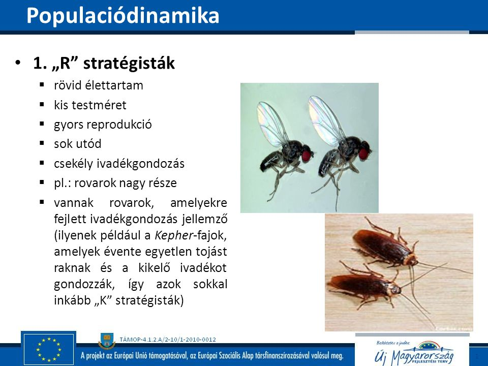 """1. """"R"""" stratégisták  rövid élettartam  kis testméret  gyors reprodukció  sok utód  csekély ivadékgondozás  pl.: rovarok nagy része  vannak rova"""