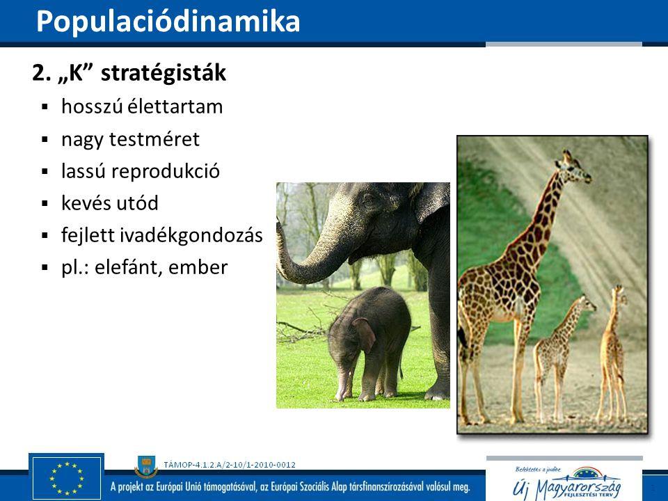 """2. """"K"""" stratégisták  hosszú élettartam  nagy testméret  lassú reprodukció  kevés utód  fejlett ivadékgondozás  pl.: elefánt, ember Populaciódina"""