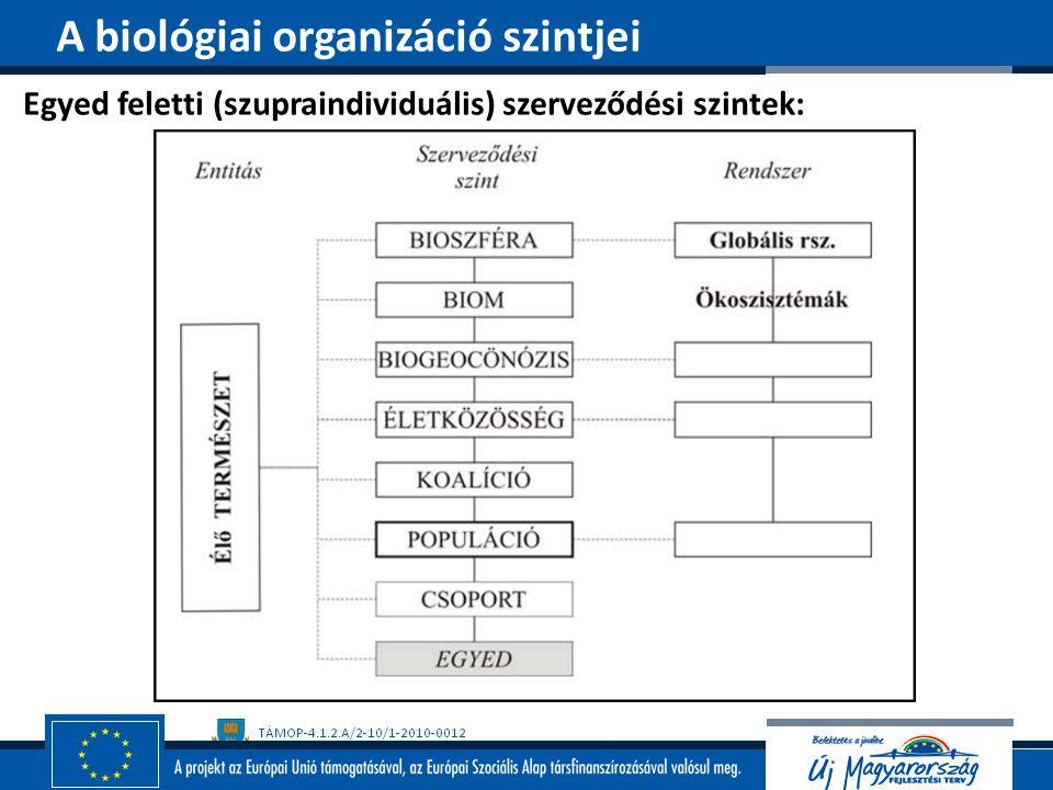 Egyed feletti (szupraindividuális) szerveződési szintek: A biológiai organizáció szintjei