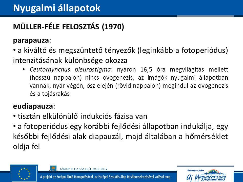 Nyugalmi állapotok MÜLLER-FÉLE FELOSZTÁS (1970) parapauza: a kiváltó és megszüntető tényezők (leginkább a fotoperiódus) intenzitásának különbsége okoz