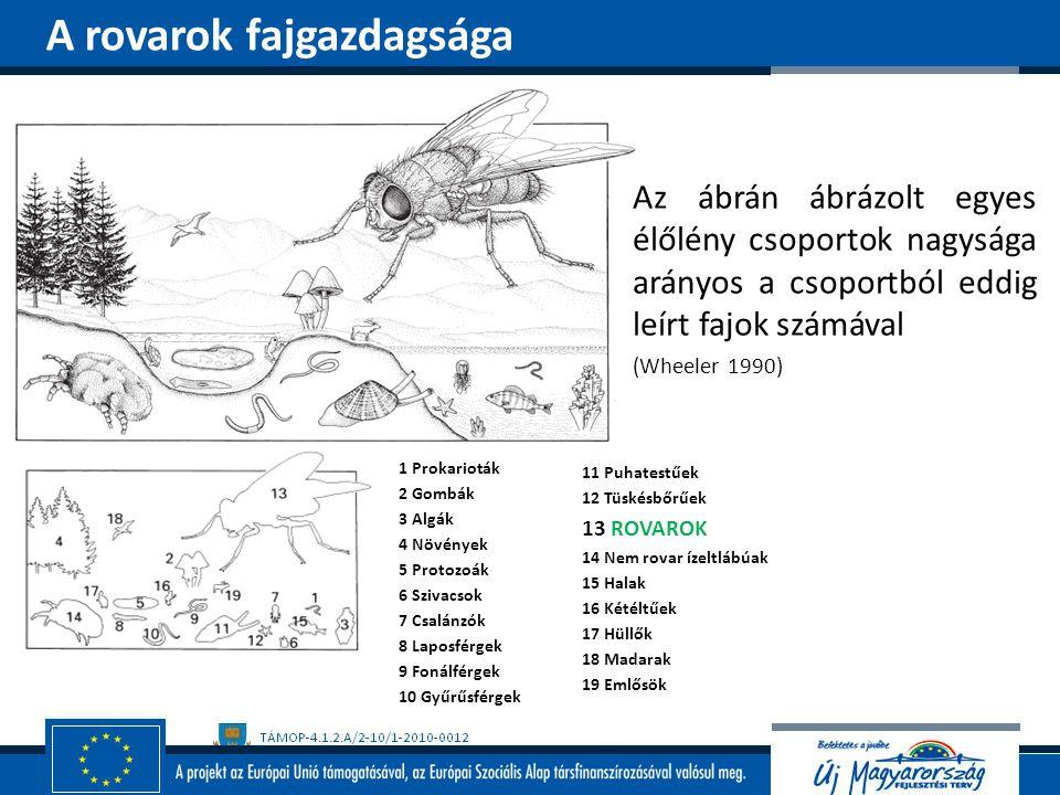 Az ábrán ábrázolt egyes élőlény csoportok nagysága arányos a csoportból eddig leírt fajok számával (Wheeler 1990) A rovarok fajgazdagsága 1 Prokariotá