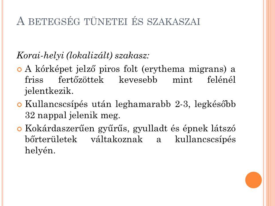 A BETEGSÉG TÜNETEI ÉS SZAKASZAI Korai-helyi (lokalizált) szakasz: A kórképet jelző piros folt (erythema migrans) a friss fertőzöttek kevesebb mint fel