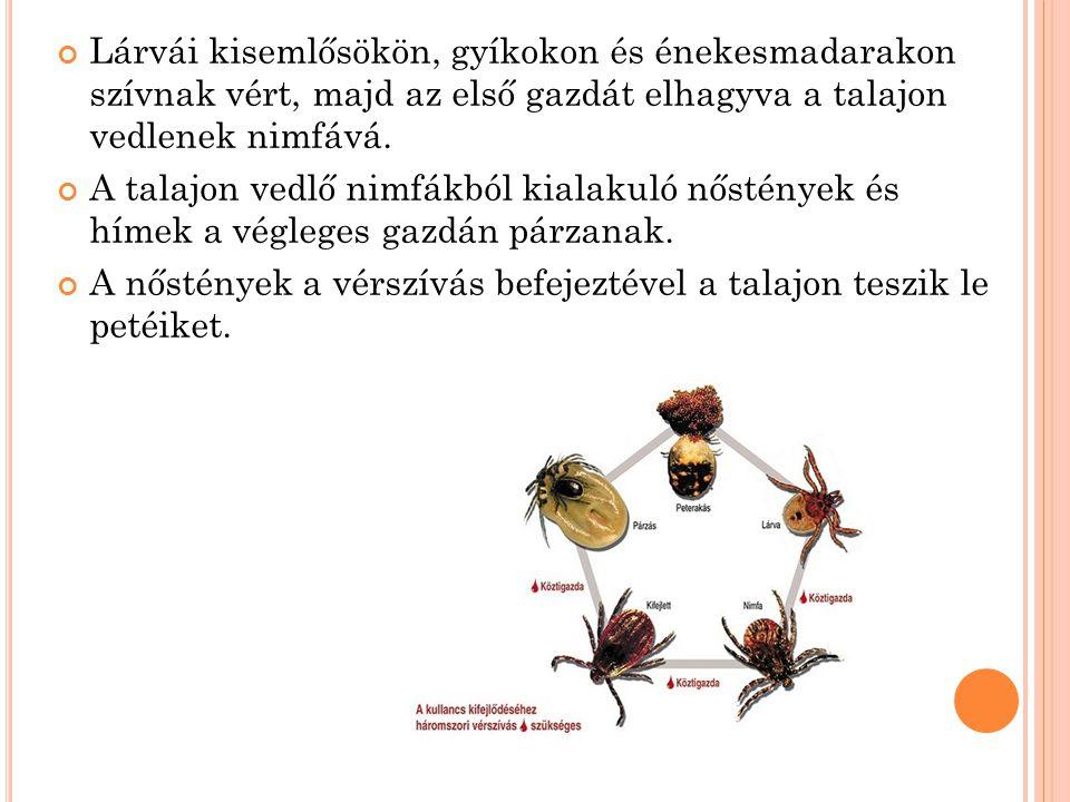 M EGBETEGEDÉSEK GYAKORISÁGA M AGYARORSZÁGON Lyme borreliosis Magyarországon 1998 óta bejelentendő betegség.
