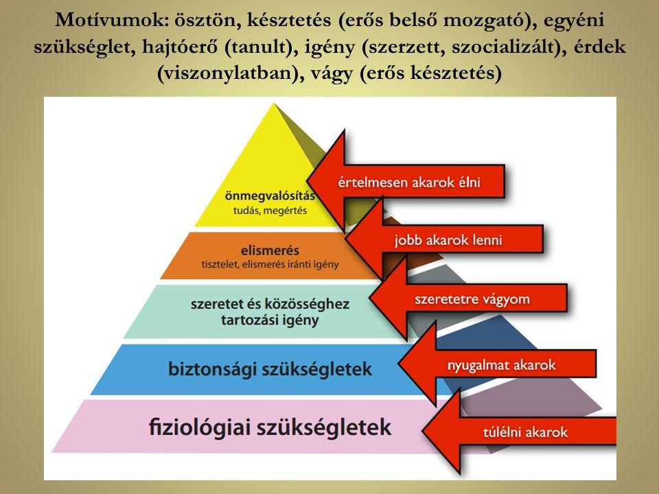 Motívumok: ösztön, késztetés (erős belső mozgató), egyéni szükséglet, hajtóerő (tanult), igény (szerzett, szocializált), érdek (viszonylatban), vágy (