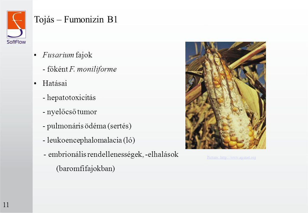Tojás – Fumonizin B1 Fusarium fajok - főként F. moniliforme Hatásai - hepatotoxicitás - nyelőcső tumor - pulmonáris ödéma (sertés) - leukoencephalomal