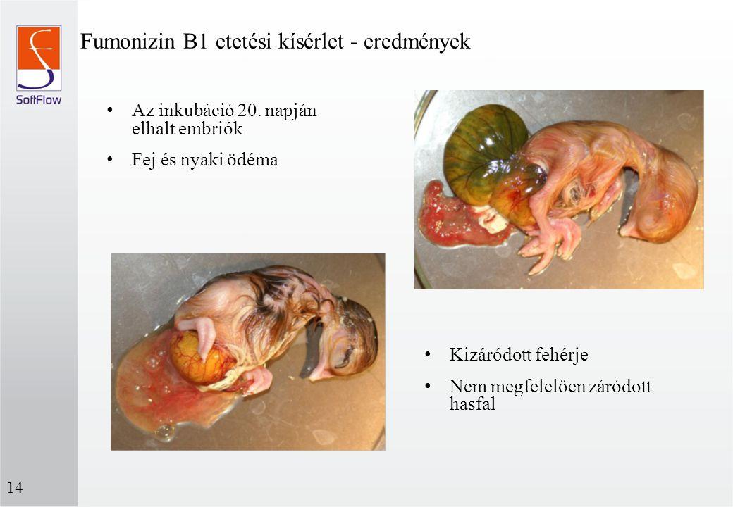 Fumonizin B1 etetési kísérlet - eredmények 14 Kizáródott fehérje Nem megfelelően záródott hasfal Az inkubáció 20. napján elhalt embriók Fej és nyaki ö