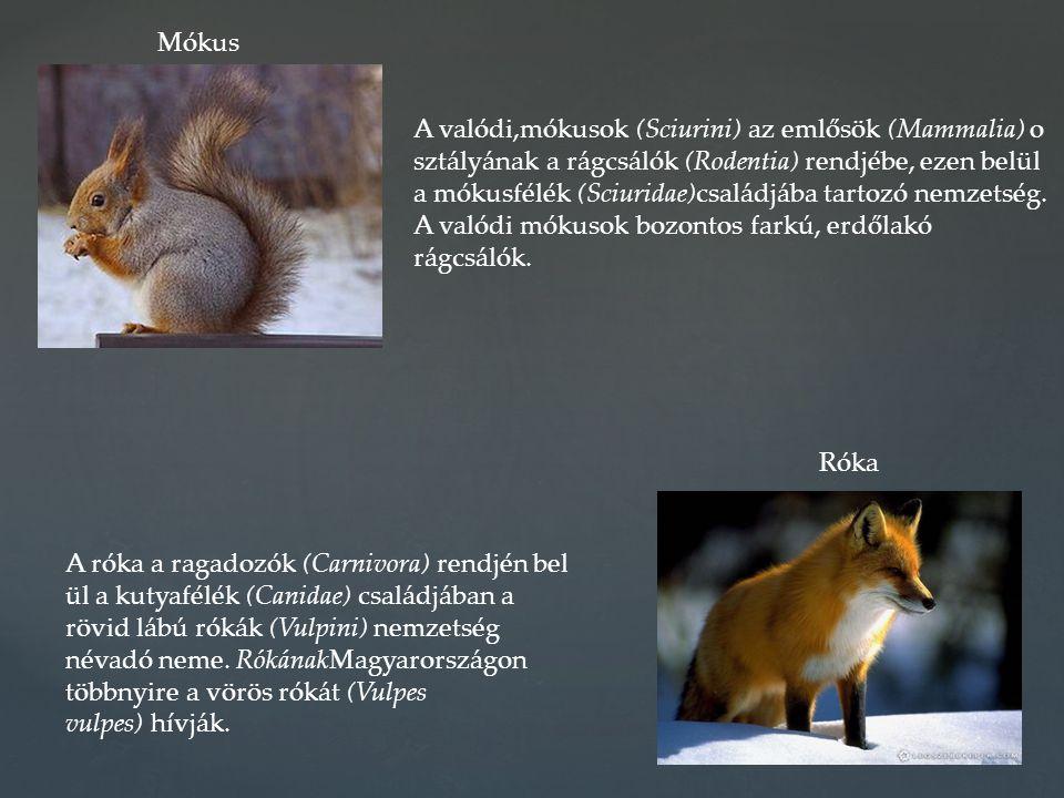A valódi,mókusok (Sciurini) az emlősök (Mammalia) o sztályának a rágcsálók (Rodentia) rendjébe, ezen belül a mókusfélék (Sciuridae)családjába tartozó