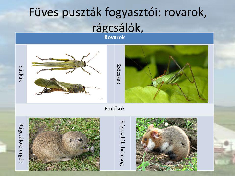 Füves puszták fogyasztói: rovarok, rágcsálók, Rovarok Sáskák Szöcskék Emlősök Rágcsálók: ürgék Rágcsálók: hörcsög