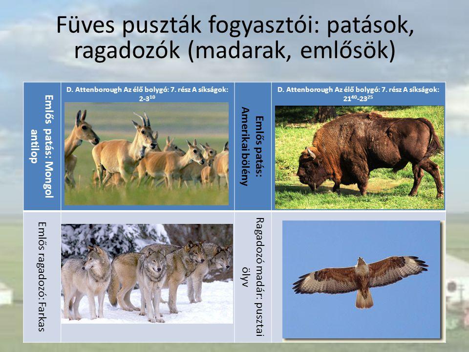 Emlős patás: Mongol antilop D. Attenborough Az élő bolygó: 7. rész A síkságok: 2-3 10 Emlős patás: Amerikai bölény D. Attenborough Az élő bolygó: 7. r