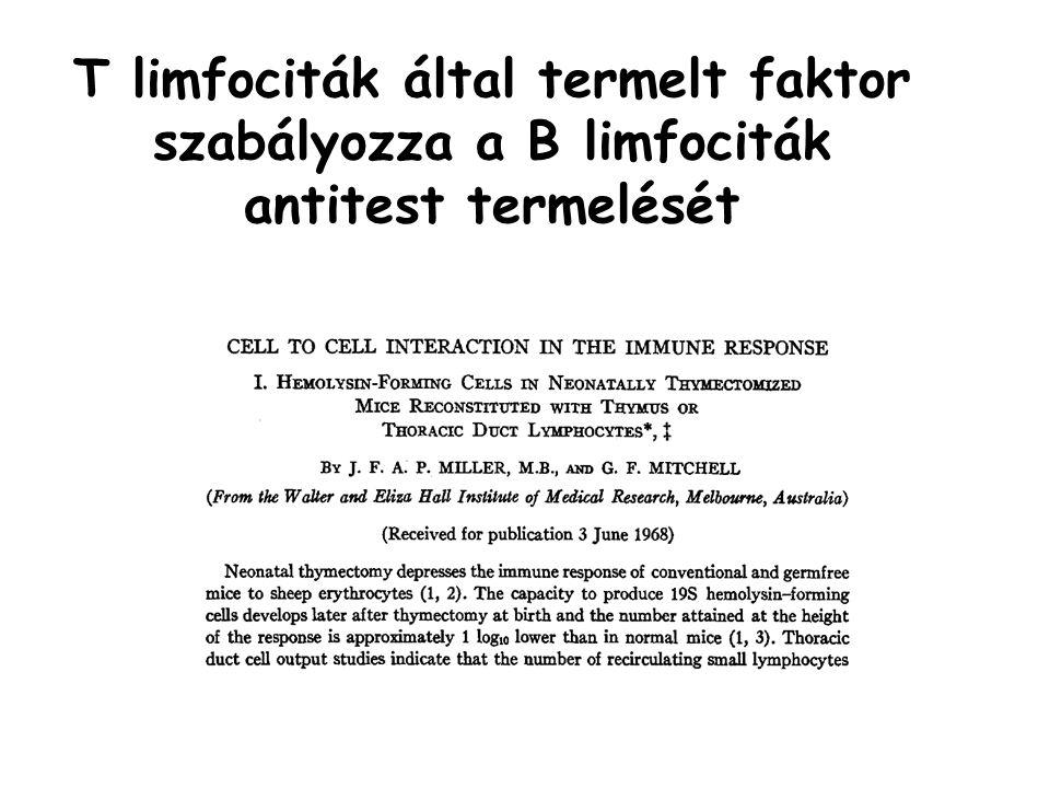 T limfociták által termelt faktor szabályozza a B limfociták antitest termelését