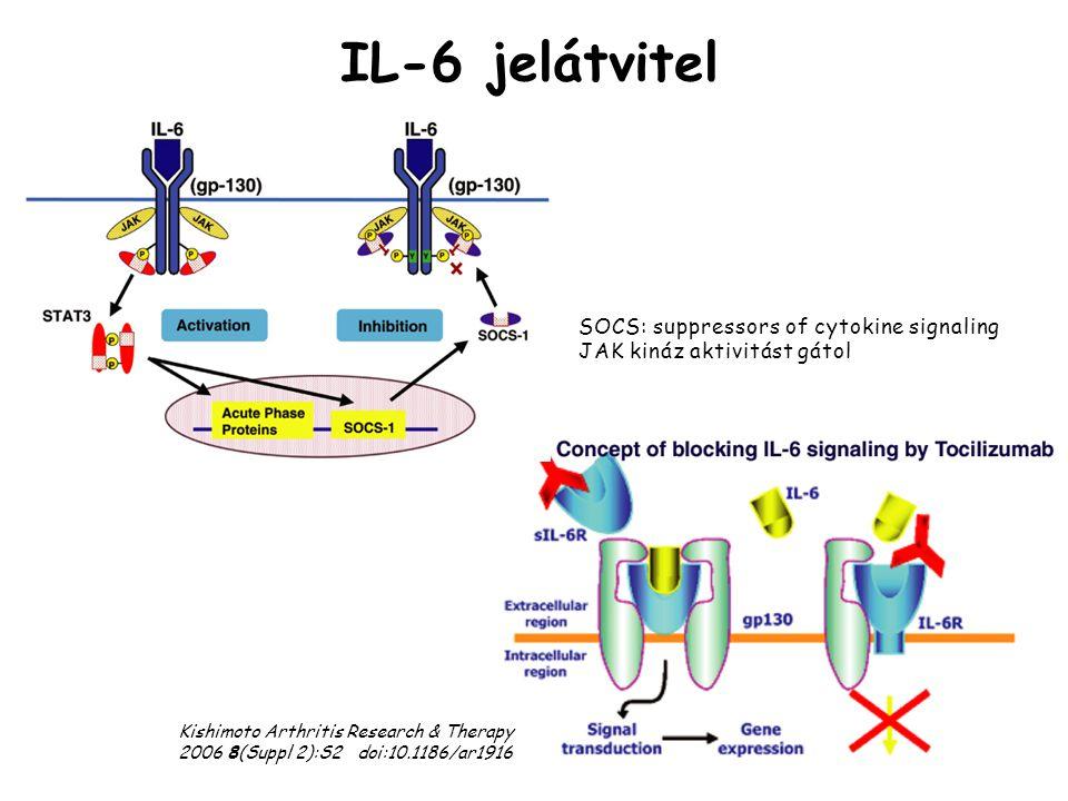 IL-6 jelátvitel Kishimoto Arthritis Research & Therapy 2006 8(Suppl 2):S2 doi:10.1186/ar1916 SOCS: suppressors of cytokine signaling JAK kináz aktivit